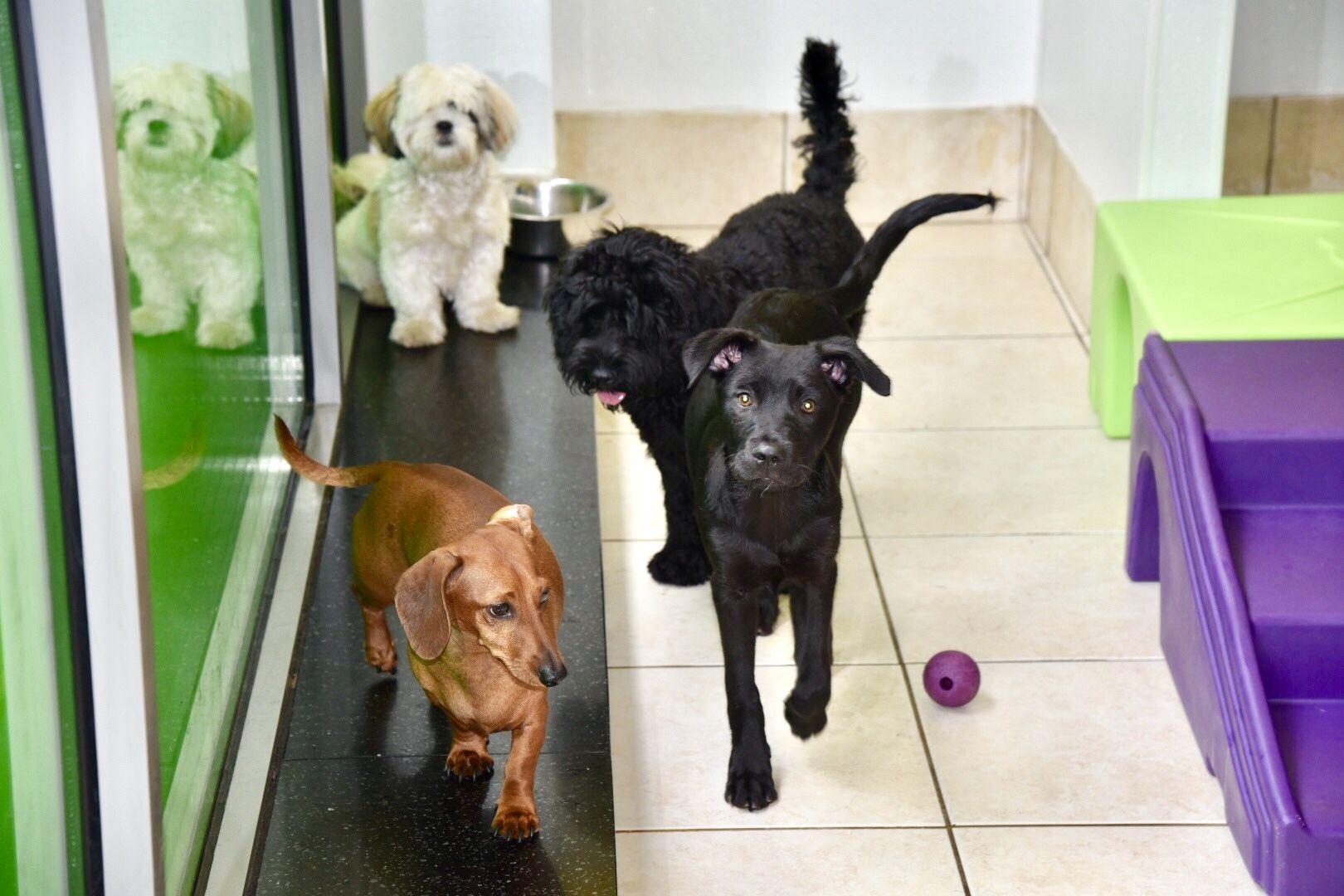 ECO Dog NYC | Dog Daycare | Dog Walking | Pet Grooming