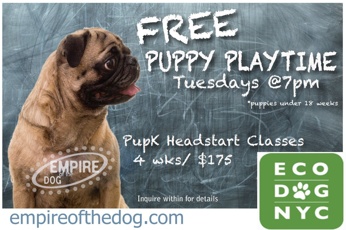 Free Puppy Playtime Tuesday At 7pm Eco Dog Nyc